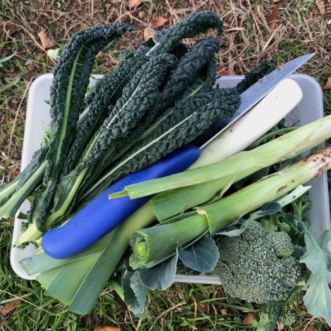 leeks and cavalo nero.jpg