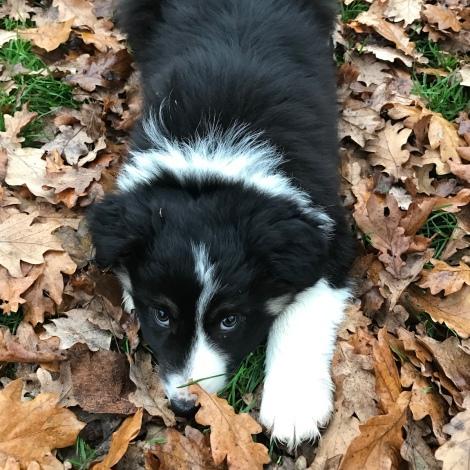 puppy eyes3.JPG