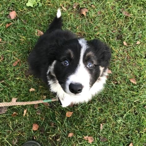 puppy eyes4.JPG