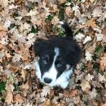 puppy-eyes5