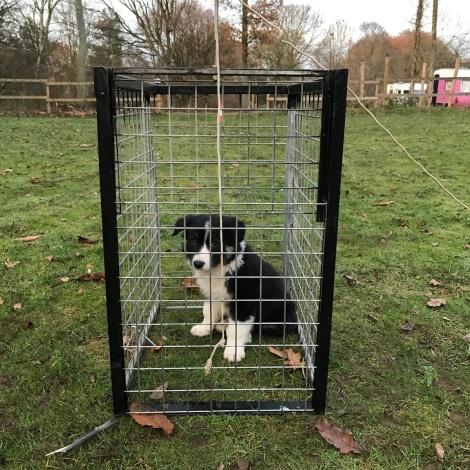 puppy in a cage.JPG