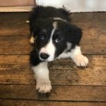 puppyeyes2