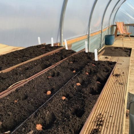 planting beans.jpg