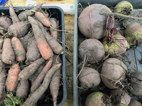 carrots and beetroot.jpg
