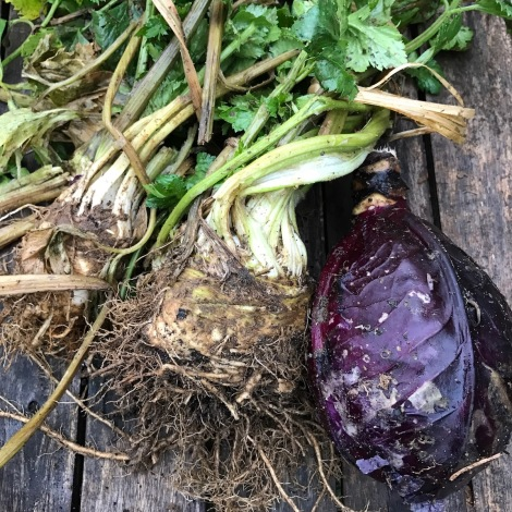 celeriac-and-red-cabbage