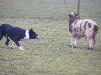k-and-one-sheep