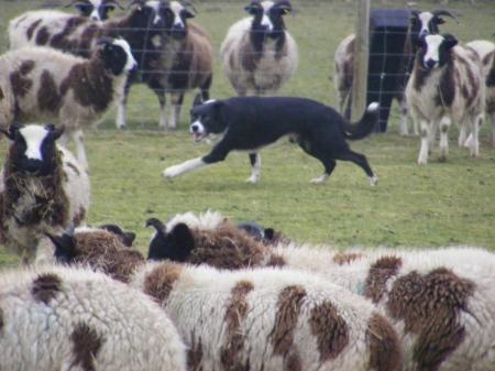 k-and-sheep