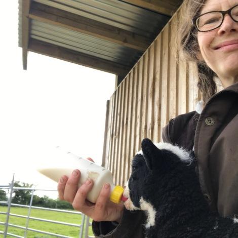 feeding lambs.jpg