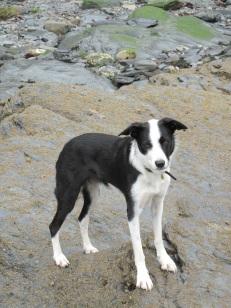 DaisyDog on beach