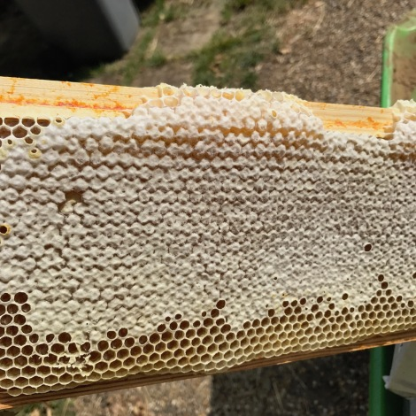 capped honey.jpg