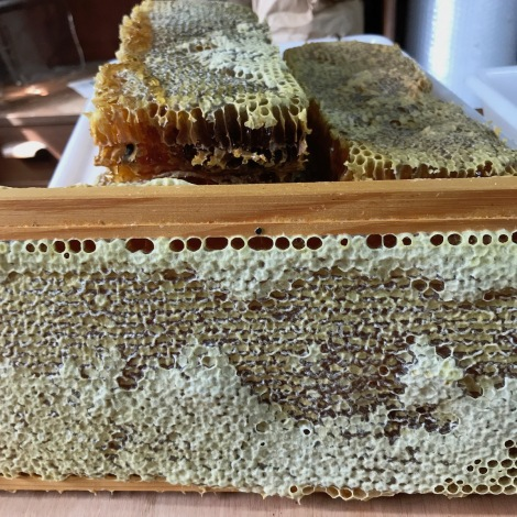 cut out honeycomb.jpg