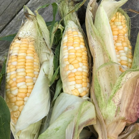 bi-colour sweetcorn