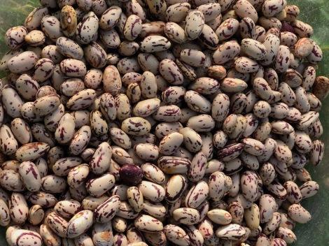 bean close-up.jpg