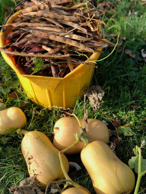 pods and squash.jpg