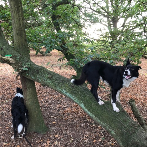 up a tree.jpg
