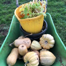 squash and celery