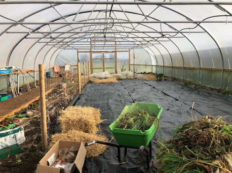 sorted polytunnel