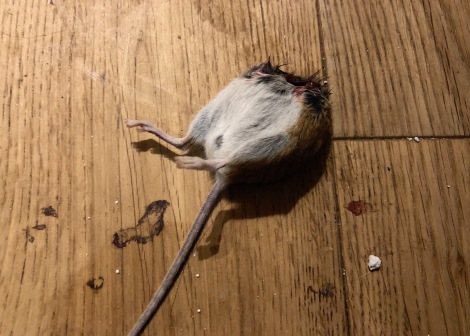 half a mouse