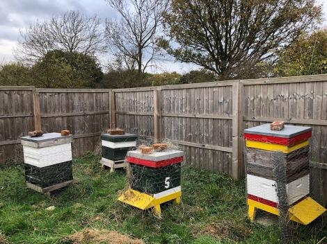 hives2.jpg