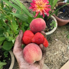 peaches and strawberries